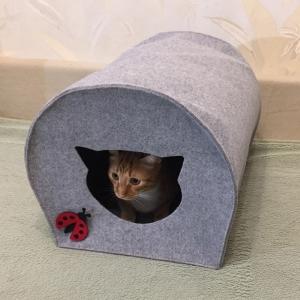 кошачий домик купить